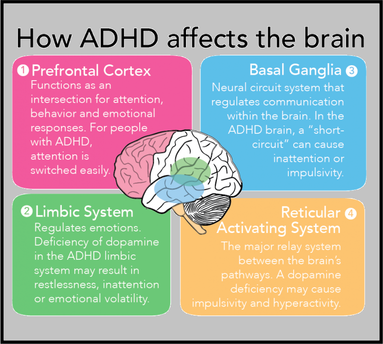 How ADHD affects the brain